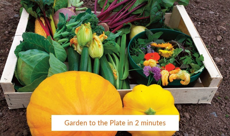 From Garden to Plate